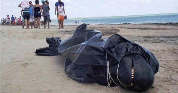 Según la prensa, es uno de los encallamientos más numerosos en décadas en costas brasileñas.