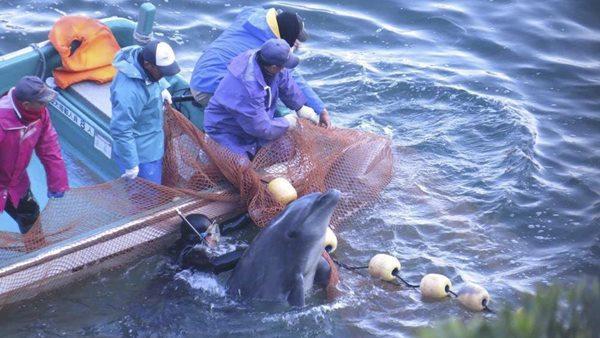 Japon_matanza delfines