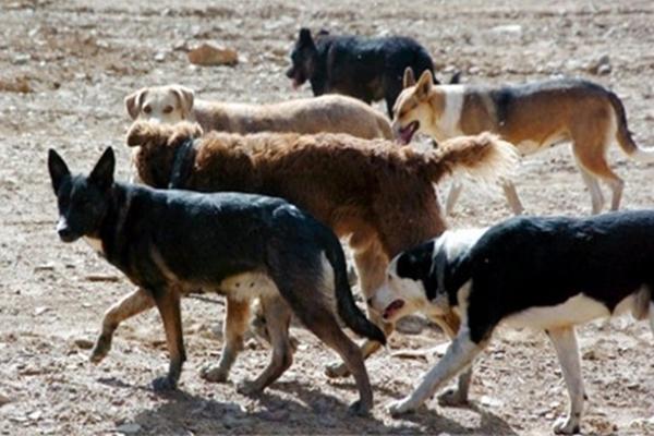 perros asilv